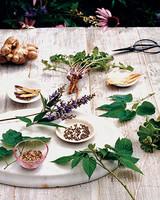 ba103450_0608_herbs3.jpg