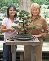bonsai-003-mld108042.jpg