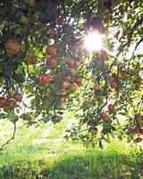 orchard-0443-d110680.jpg