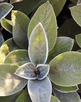 silvergreen-md110341.jpg