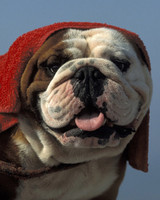 15 Summer Safety Tips for Dogs