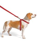Safe Dog-Walking Tips
