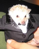 pet_halloween08_56485.jpg