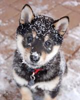 Snow Angels Photo Contest