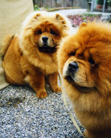 pets_marthas_pets_dog3.jpg