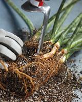 dividing-plants-2-mshot.jpg