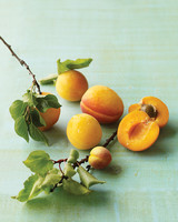 Apricot Recipes