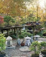 bonsai-nursery-mld108122.jpg
