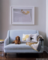 mpa103581_0108_couch_dog.jpg