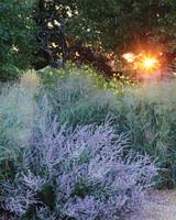 ogden-garden-114-d111601.jpg