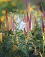 ogden-garden-160-d111601.jpg