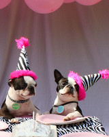 Party Animals 2010 Photo Contest