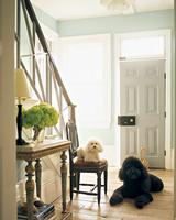 mla104089_0908_entry_dogs.jpg