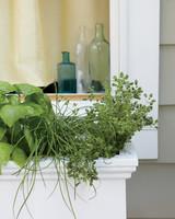 ld106425_0311_italian_herbs.jpg
