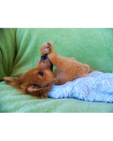 pets_0810_10258902_13543637.jpg