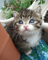 Kittens 2011 Photo Contest