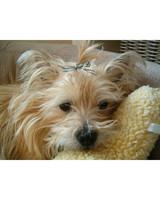 pets_adoption_6660121_16602861.jpg