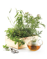 good-things-tea-garden-md108770.jpg