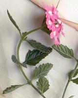 mld104318_0609_texas_apple_blossom.jpg