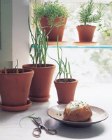growing-garlic-greens-1099-ml910aa21.jpg