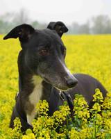 pets_adoption_5759138_122717_13641980.jpg