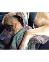 pets_adoption_5945154_122717_13714540.jpg