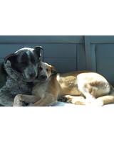 pets_adoption_6376421_122717_11967435.jpg