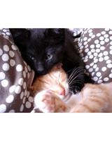 pets_adoption_6399090_122717_14015417.jpg