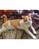 pets_adoption_6708849_122717_11653395.jpg