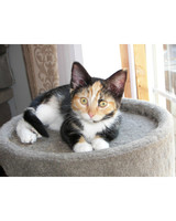 pets_adoption_6795715_122717_18454683.jpg