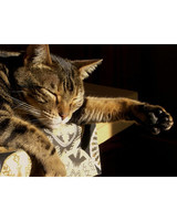 pets_adoption_7091918_122717_18943932.jpg