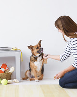 Senior Dog? 5 Solutions to Common Issues
