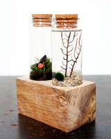 mossandtwig-land-and-sea-terrarium-0915.jpg
