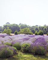 lavender-gherman-blueskye-15-edit-d110407.jpg