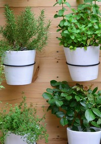 The Coolest Gardening Ideas and Trends to Dig Into