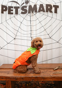 PetSmart Just Hosted an Epic Howl-oween Party for Dogs