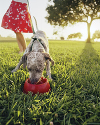 Hot-Weather Tips for Pet Owners