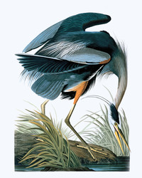 Legendary Audubon Art Can Now Be Yours