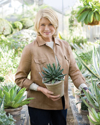 Martha's Home: Decorating with Houseplants