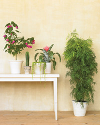 6 Common Houseplant Problems, and What to Do About Them