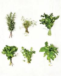 A Fresh Look at Herbs
