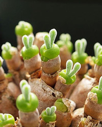 "These ""Rabbit"" Succulents Are Going Viral Just in Time for Easter"