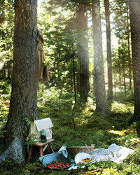 Forest Bathing: The Stress-Reducing Activity That Could Save Your Life