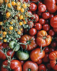 mla103936_0509_tomatos.jpg