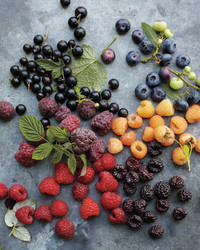 Dig Deeper: Mail-Order Berry Plant Sources