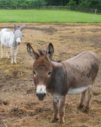 Killing the Donkey Paddock Grass