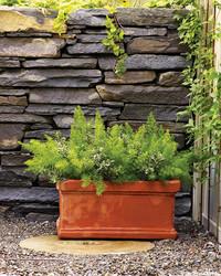 Shade-Loving Plants