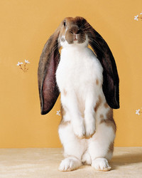 10 Fun Facts About Bunnies, Just in Time for Easter
