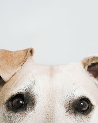 8 Things Your Dog is Trying to Tell You
