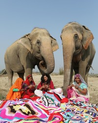 You Can Help Knit Giant Sweaters For Rescued Elephants